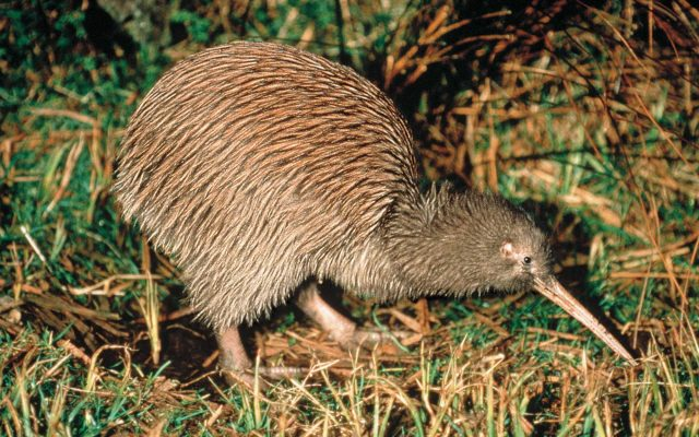 An unforgettable  Kiwi experience